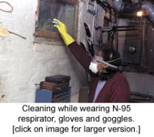 Man cleaning mold while wearing N95 mask.